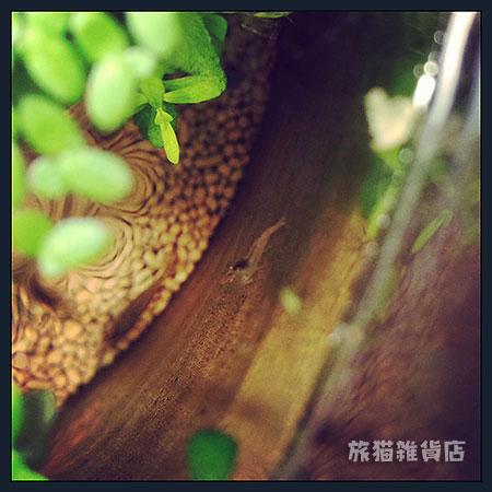 130620_numaebi2.jpg