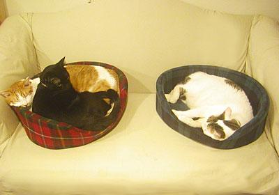 3cats_051107.jpg