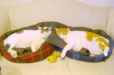 3cats_051215.jpg