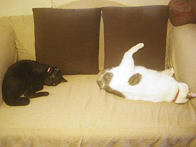 3cats_06907.jpg