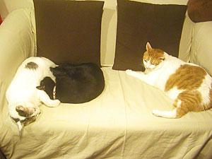 3cats_5926.jpg