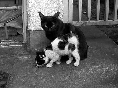 black_n_white.jpg