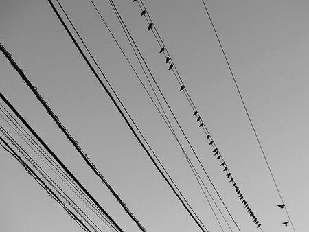 densen_bird.jpg