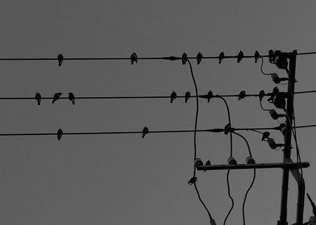 densen_bird2.jpg