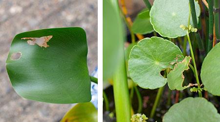 leaf_090807.jpg
