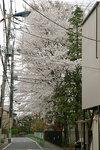 sakura_08_03.jpg