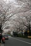 sakura_08_06.jpg