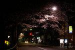sakura_08_07.jpg
