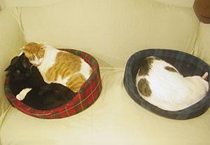 3cats_0512302.jpg