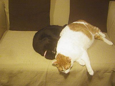3cats_06715.jpg