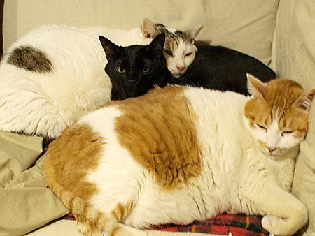 3cats_1002061.jpg