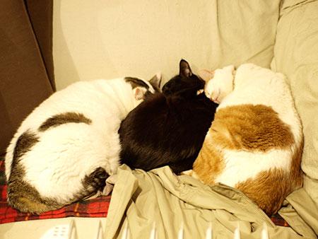 3cats_1002062.jpg