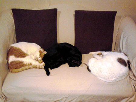 3cats_110327.jpg