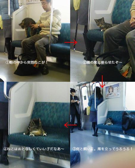 電車猫.jpg
