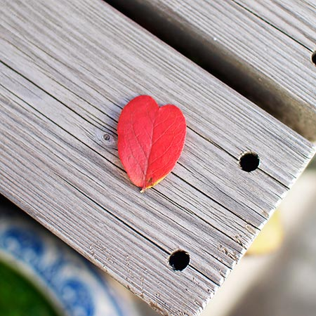 blueberry_leaf.jpg