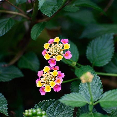 flower_hanabi.jpg