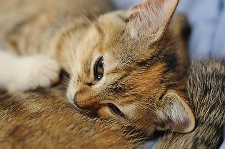 iwata_cat_02.jpg