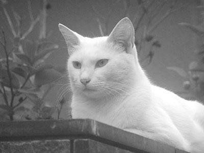 madeye_cat.jpg