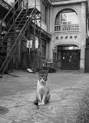 sakigake_01.jpg