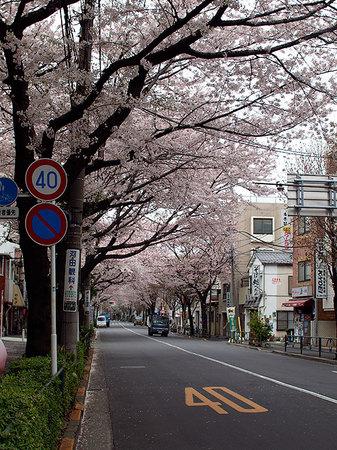 sakura2011_02.jpg