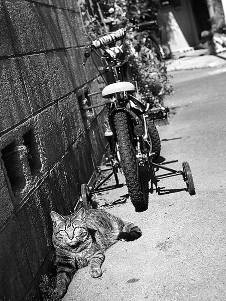 zoushi_rojineko.jpg